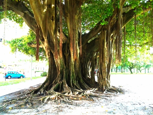 Up close tree in St. Pete